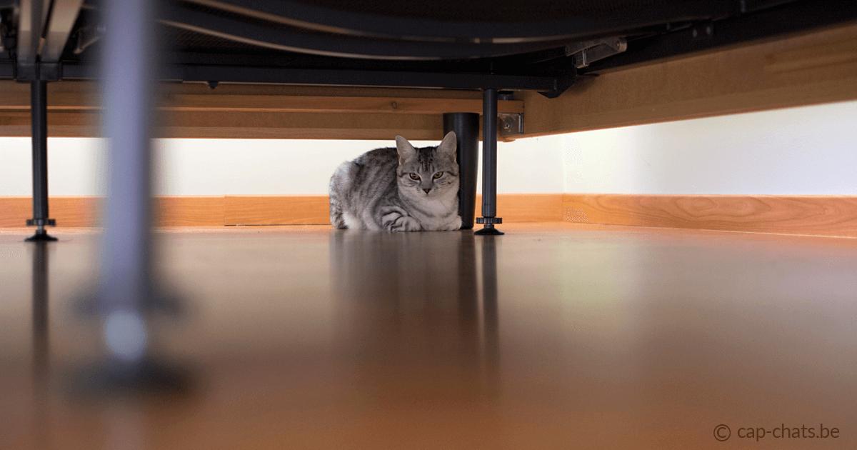 mon chat a peur des inconnus que faire. Black Bedroom Furniture Sets. Home Design Ideas